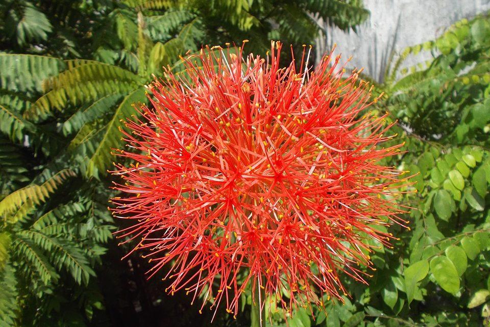 desert-flower-plant-1999796_960_720