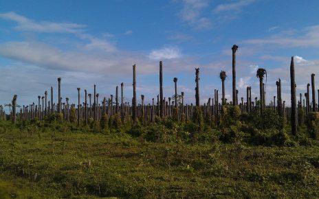 palm-trees-3591430_1920