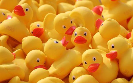 duck-meet-4127713_1920